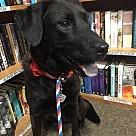 Adopt A Pet :: Natasha - Denton, TX