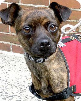 Mixed Breed (Small) Mix Dog for adoption in Philadelphia, Pennsylvania - Josie