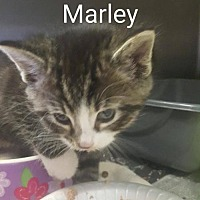 Adopt A Pet :: Marley - Evansville, IN