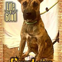 Adopt A Pet :: Captain - Valley Stream, NY