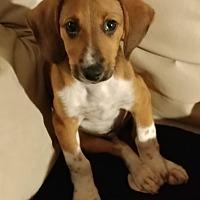 Adopt A Pet :: Tom - Aurora, IL