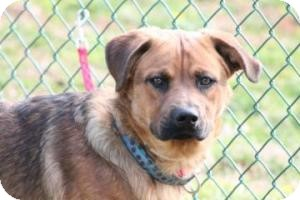 German Shepherd Dog Mix Dog for adoption in Baltimore, Maryland - Happy JoJo