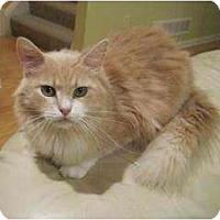Adopt A Pet :: Bit-O-Honey - Cleveland, OH