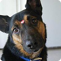 Adopt A Pet :: Spartacus - Denver, CO