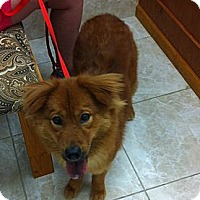 Adopt A Pet :: Tamalee - New Boston, NH