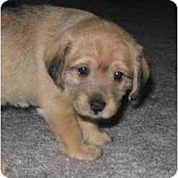 Adopt A Pet :: Abby - Chandler, IN