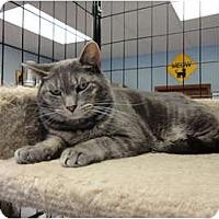Adopt A Pet :: Cissy - Kingston, WA