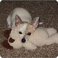 Adopt A Pet :: Peaches - Arlington, TX