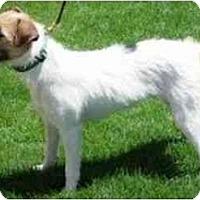 Adopt A Pet :: HALEY - Scottsdale, AZ