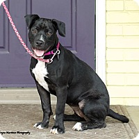 Adopt A Pet :: Cleo - Knoxville, TN