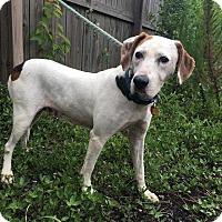 Adopt A Pet :: Snow - Charelston, SC