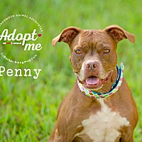 Adopt A Pet :: Penny - Friendswood, TX