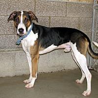 Adopt A Pet :: Jasper - Ruidoso, NM