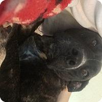 Adopt A Pet :: Leroy - Bakersville, NC