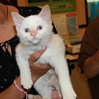 Adopt A Pet :: Viper - Rochester, MN