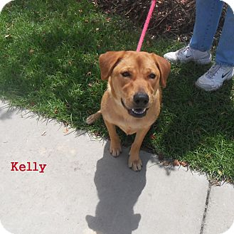 Retriever (Unknown Type) Mix Dog for adoption in Slidell, Louisiana - Kelly