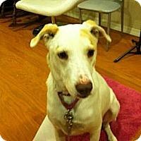 Adopt A Pet :: REX - Phoenix, AZ