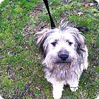 Adopt A Pet :: Winn Dixie - Shirley, NY