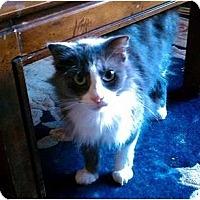 Adopt A Pet :: Puffy - Riverside, CA