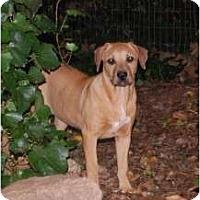 Adopt A Pet :: Lucy - Douglasville, GA