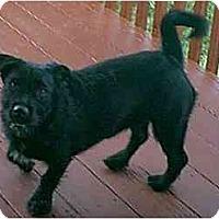 Adopt A Pet :: Chloe - dewey, AZ