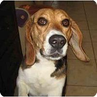 Adopt A Pet :: Jewellina - Phoenix, AZ