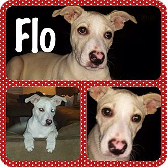 Terrier (Unknown Type, Medium) Mix Dog for adoption in Walker, Louisiana - Flo