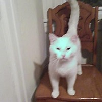 Adopt A Pet :: Snowflake - Philadelphia, PA