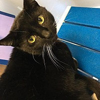 Adopt A Pet :: Whiskers - Jupiter, FL