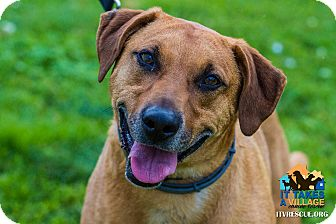 Mixed Breed (Large) Mix Dog for adoption in Evansville, Indiana - Rocko