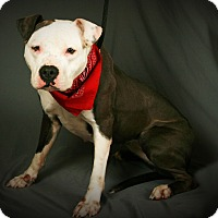 Adopt A Pet :: Princess - Toms River, NJ