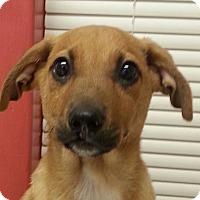 Adopt A Pet :: Francis - Pompton Lakes, NJ
