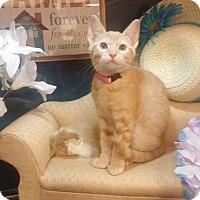 Adopt A Pet :: Peaches - Arlington/Ft Worth, TX