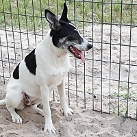 Adopt A Pet :: Paige - San Antonio, TX