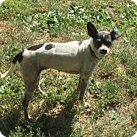 Adopt A Pet :: Twiggy - Providence, RI