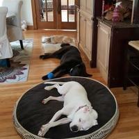 Adopt A Pet :: Natasha - Lowell, IN