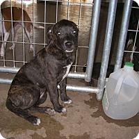 Adopt A Pet :: Bell - Buchanan Dam, TX
