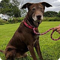 Adopt A Pet :: Stix - Lisbon, OH