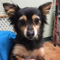 Adopt A Pet :: TINKERBELL - Palm Desert, CA