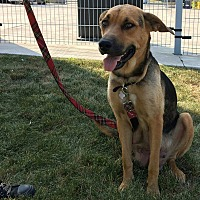 Adopt A Pet :: Daisy and Pups - Toronto, ON