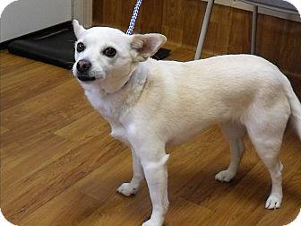 Chihuahua Mix Dog for adoption in Meridian, Idaho - Kaya