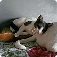 Adopt A Pet :: Toot - Port Republic, MD