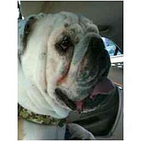 Adopt A Pet :: Maxwell Smart - Winder, GA