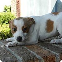 Adopt A Pet :: Danny *Adoption Pending* - South Jersey, NJ