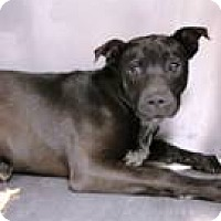 Adopt A Pet :: Corndey - Greenville, SC
