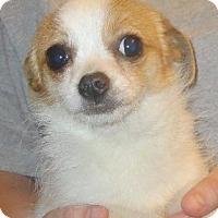 Adopt A Pet :: Gertrude - Greenville, RI