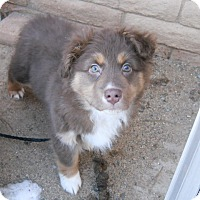 Adopt A Pet :: Reggie - dewey, AZ