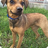 Adopt A Pet :: Mindy - Ocean Ridge, FL