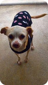 Chihuahua Mix Dog for adoption in Newport Beach, California - Trudy