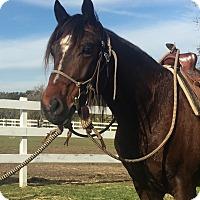 Adopt A Pet :: Corona - Oakdale, CA
